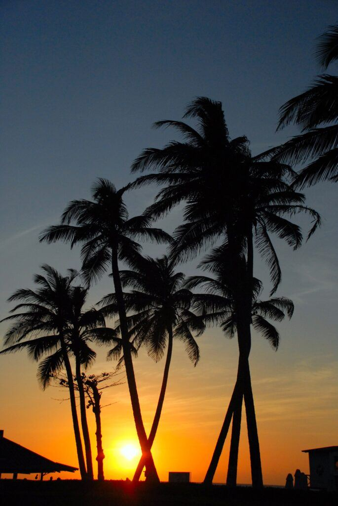 Palm trees at sunset in Santa Marta Colombia. Used in the information page Colombian City to City Transfers and Airport Transfers.