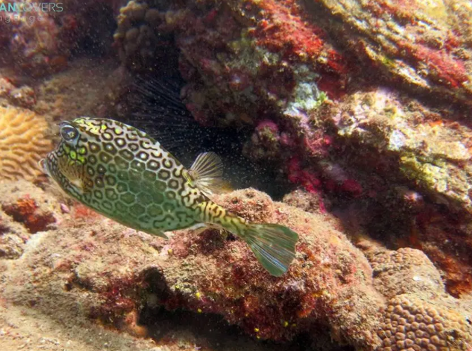 Reef fish used in the article Why scuba diving in Colombia is one of the most underrated travel experiences