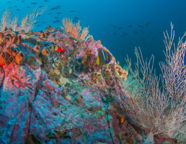 Photo of reef near Malpelo Island Colombia used in the article Why scuba diving in Colombia is one of the most underrated travel experiences