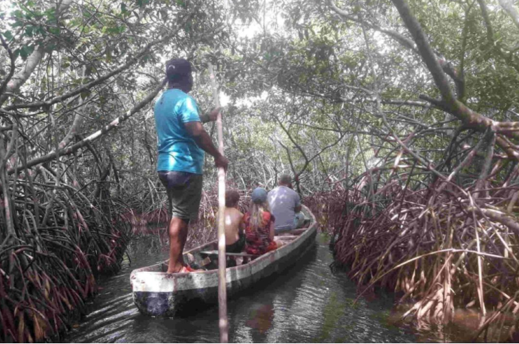 Canoeing through the mangrove  tunnels Cartagena Colombia. used in the article,  Best of Medellin, Cartagena and the Pacific Coast of Colombia